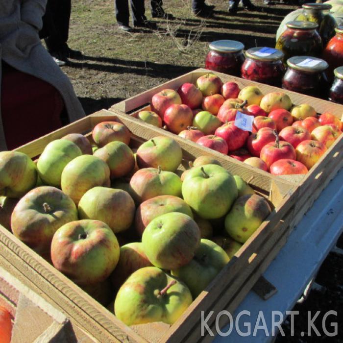 Чаткал районунун Кызыл-Токой айылында түшүм майрамы өткөрүлдү