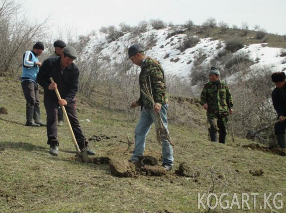 Празднование Международного Дня леса в Джалал-Абадской области