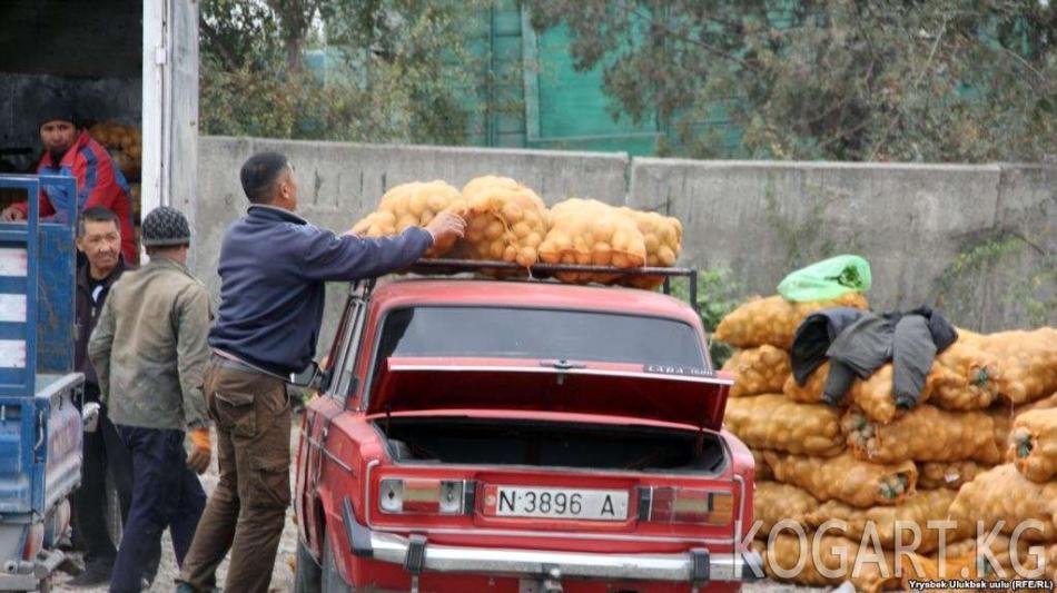 Кыргызстан Өзбекстанга картөшкө экспорттой баштады