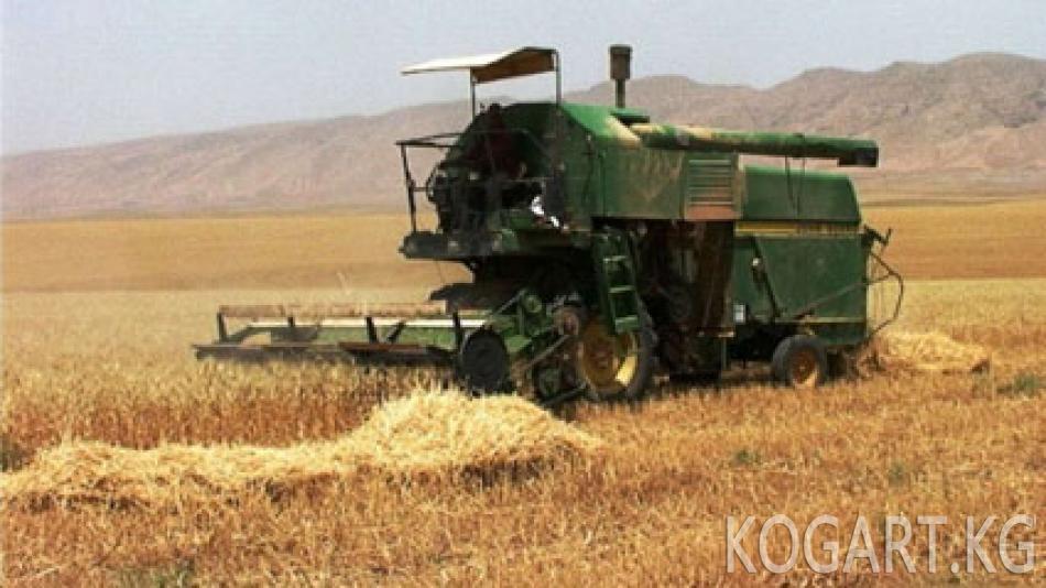 Өзбекстанда аким дыйкандардын буудайын күчкө салып алып коюуда