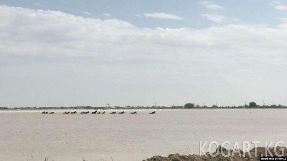 Казакстандын Түркстан облусунда 22 миң киши эвакуацияланды