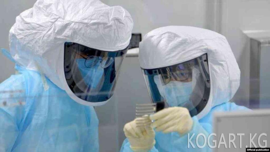 Бир сутка ичинде коронавирус жуккан 43 адам жаңы катталды
